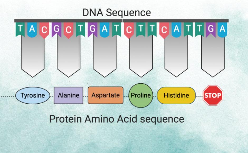 Расшифровка генома. Генетический тест